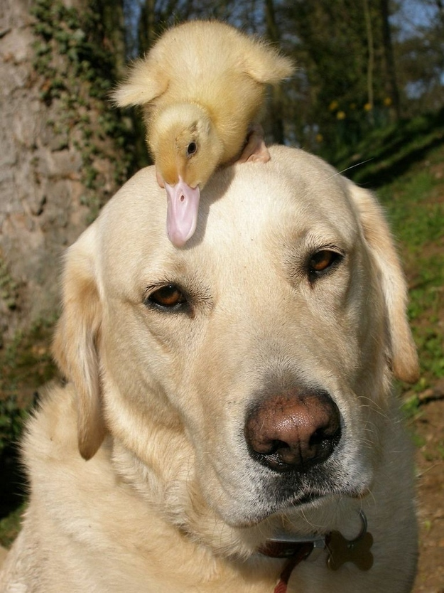 Трогательные и невероятные истории о дружбе между животными