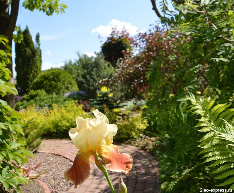 Еще июнь, другой сад