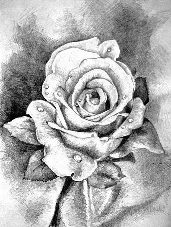 цветы рисунки картинки карандашом