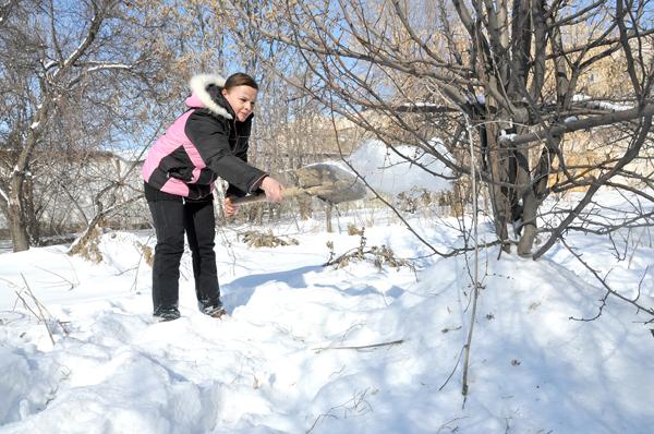 Чем заняться садоводу на зимних каникулах