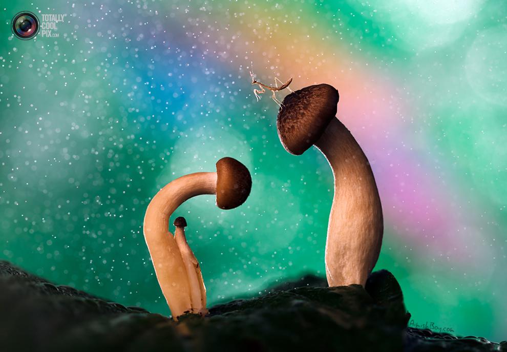 aimishboy 034 Удивительная макрофотография: неожиданно гламурные насекомые и многое другое