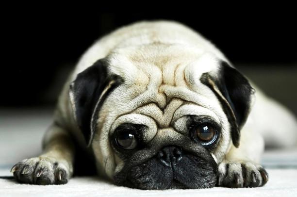15 самых крутых и мимимишных домашних животных