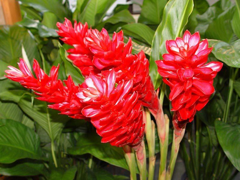 Выращиваем на подоконнике самое полезное и целебное растение легко и просто