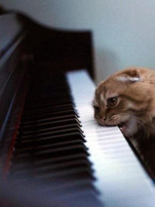25 самых улётных снимков котов. Это точно поднимет тебе настроение!