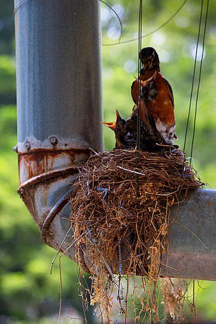 Самые необычные места гнездования