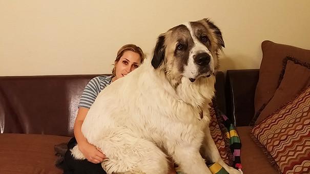 46. Так любим сидеть размер, собака
