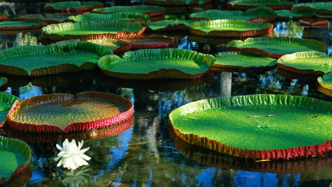 Цветочный рай Амазонии