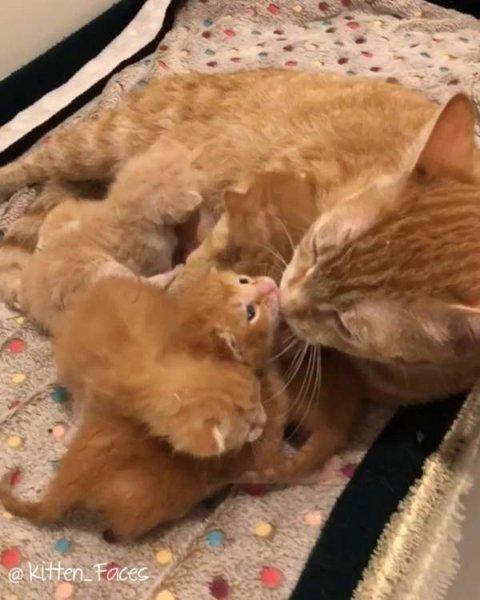 Ветеринар отказался усыплять…