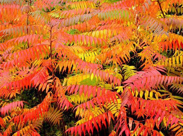Осенний сад фото