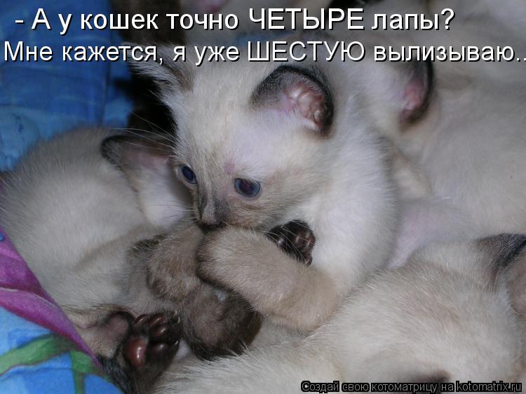 Котоматрица - - А у кошек точно ЧЕТЫРЕ лапы? Мне кажется, я уже ШЕСТУЮ вылизываю...