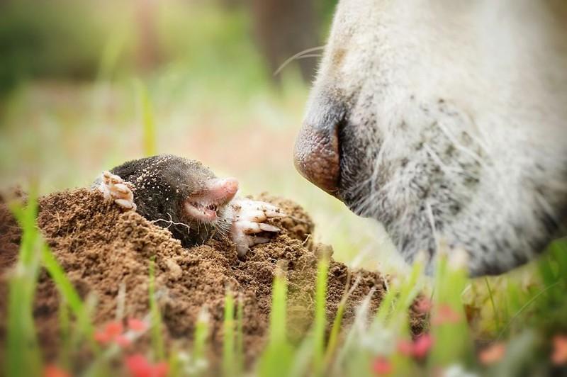 Любимый носик нос, собака, фотография