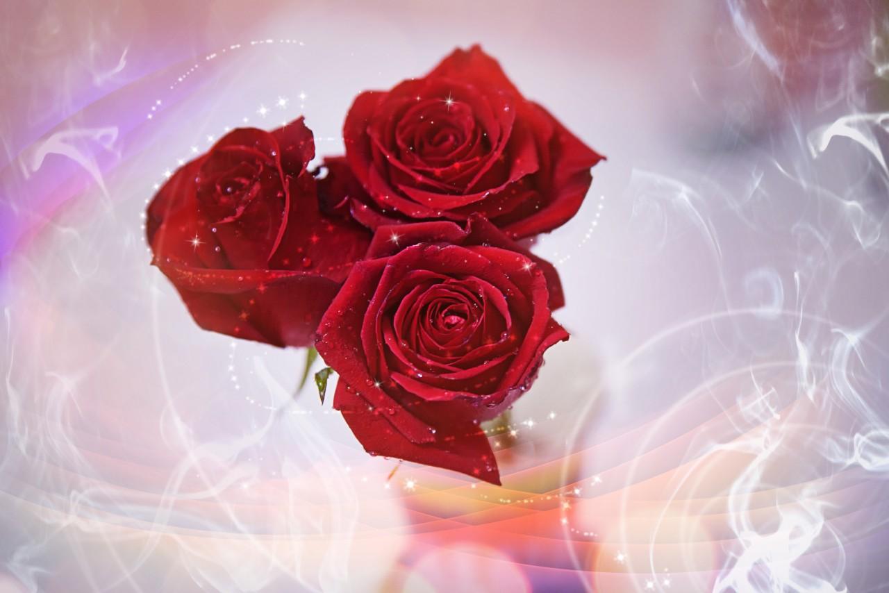 Открытки букеты из роз или просто одиночные розы - 3D галерея
