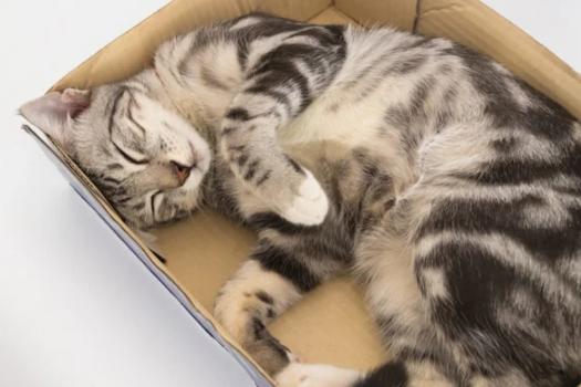 Секрет идеального сна? Воспользуйтесь опытом кошки!