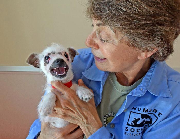 Американская семья взяла собаку из приюта, несмотря на ее недуг добрые люди, недуг, собака