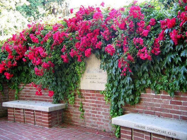Размножаем розы черенками. Мастер-класс