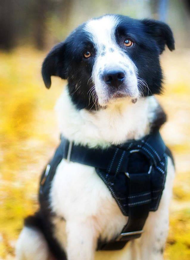 Пуля в теле, проволока на шее, история одной собаки добро, история