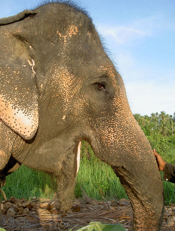 Слон и секс 1 фотография