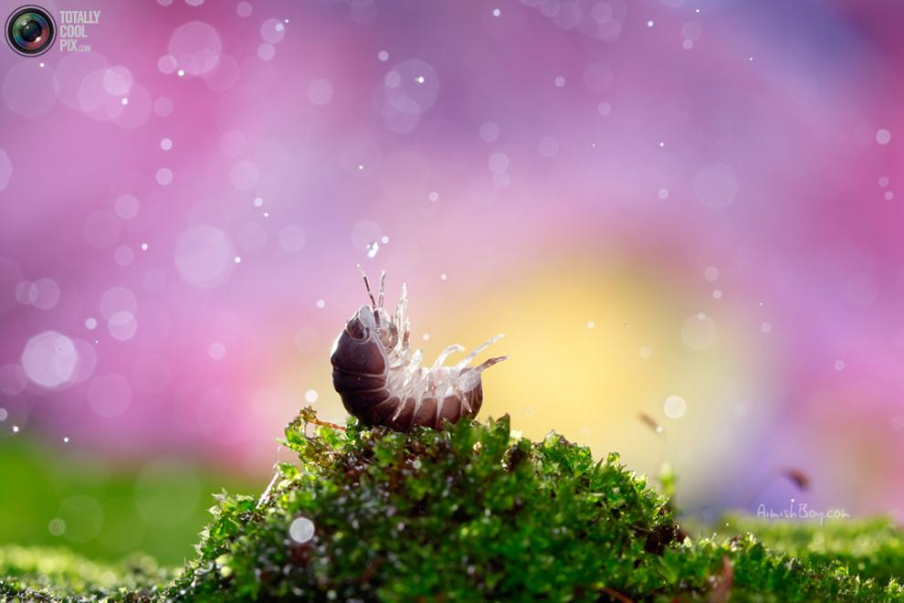 aimishboy 004 Удивительная макрофотография: неожиданно гламурные насекомые и многое другое