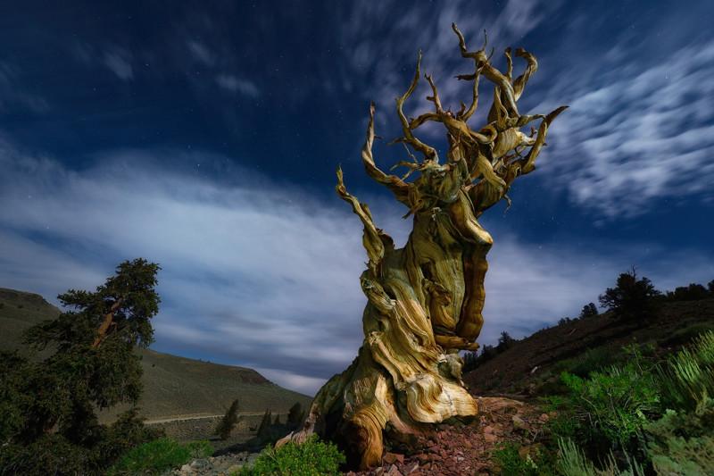 Деревья, которые хотят, чтобы их сфотографировали