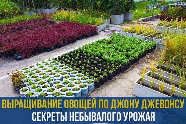 Выращивание овощей по Джону …