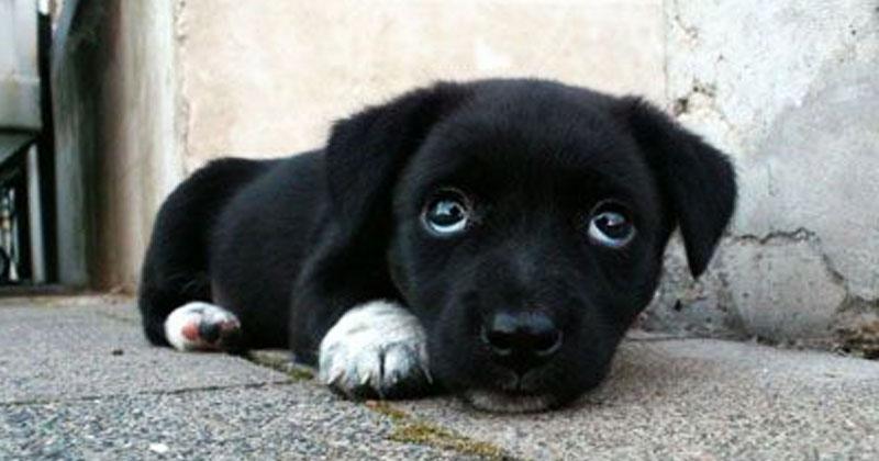 Семья думала, что купила щенка. Но когда малыш подрос, люди оказались в шоке!