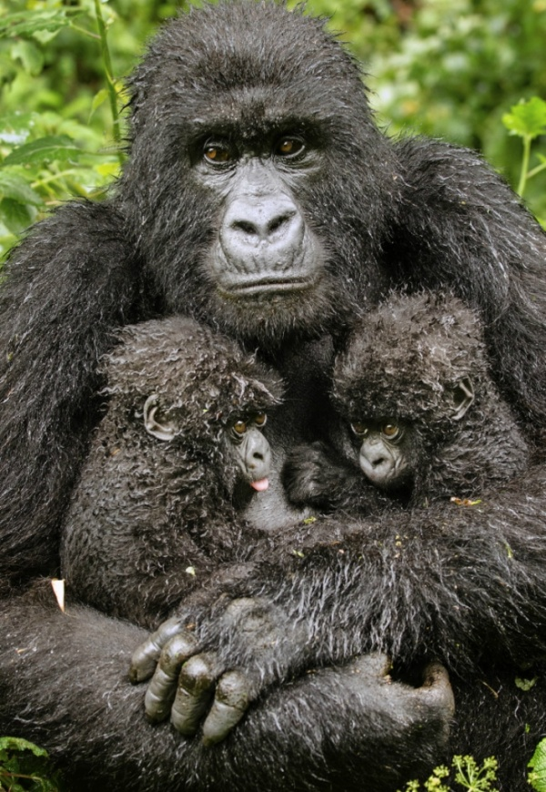 Лучшие фотографии Wildlife Photographer 2013 - это надо видеть!!!