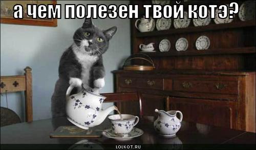 а чем полезен твой котэ?