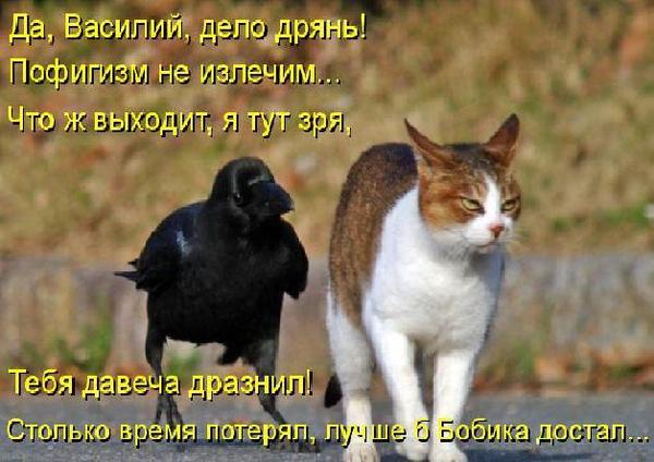 Позитив зверский с котоматрицами