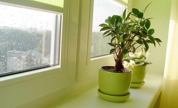 Комнатные цветы благоприятные для дома и семьи