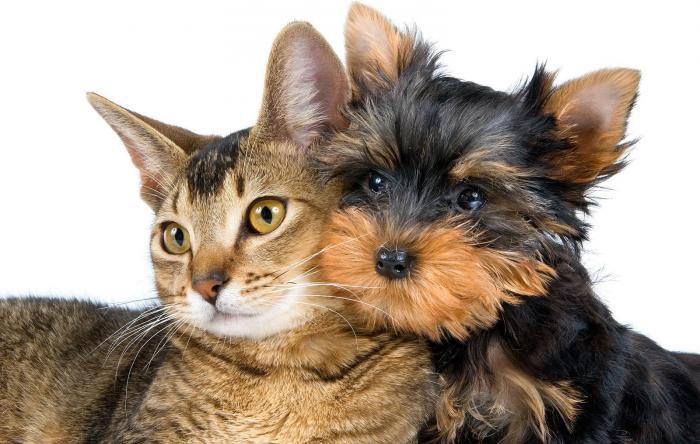 Как коты дружат с собаками (16 фото)