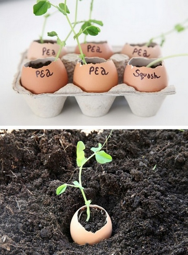 15 советов для начинающих садоводов