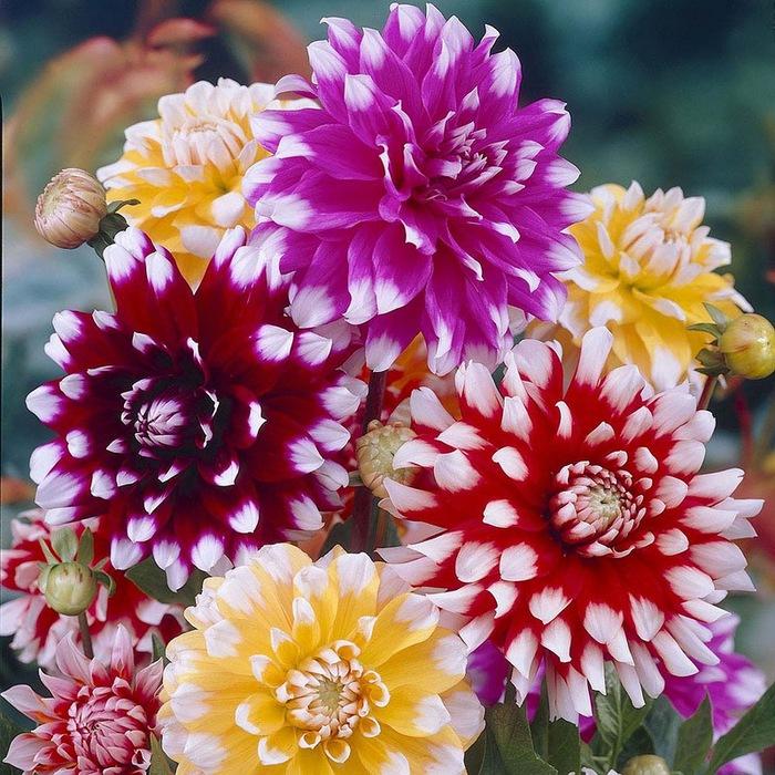 цветы осени 9 (700x700, 602Kb)