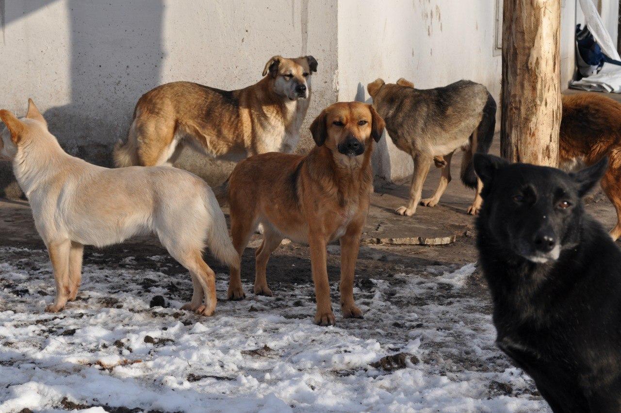 Однажды меня окружила стая собак…