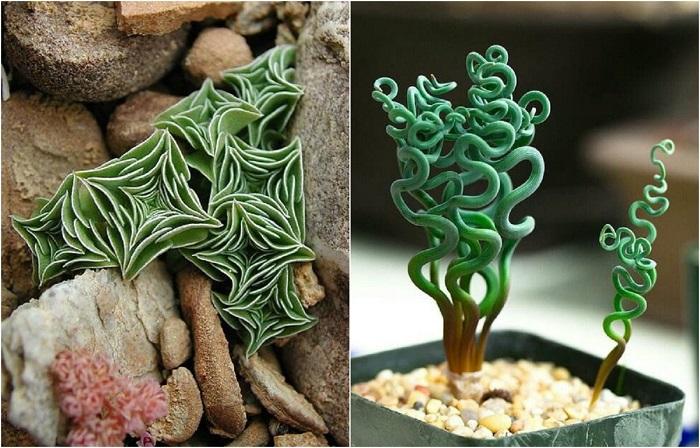 Комнатные растения, которые словно с другой планеты