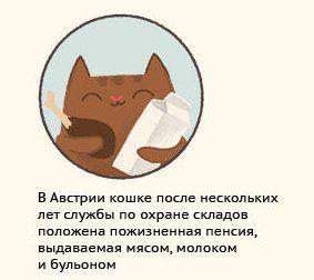 животные, интересное, факты, кошки
