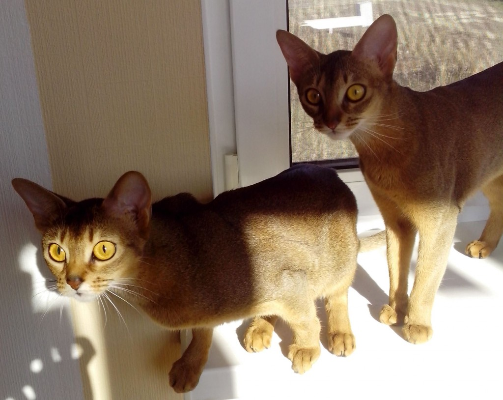 Вязание с котами 196