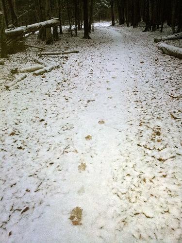 Ужасы Подушкинского леса: Чьи это следы?