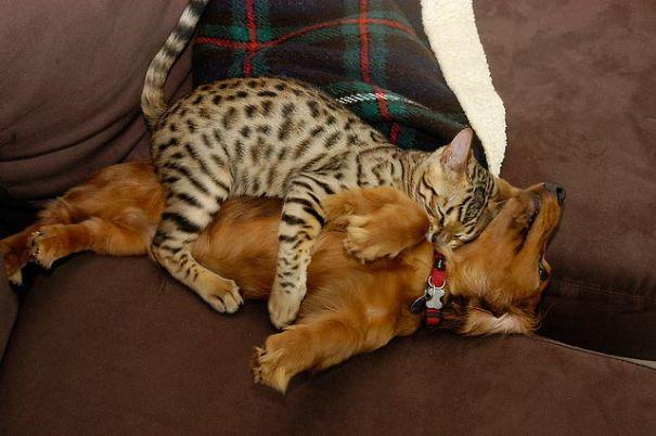 Умора!!! Коты и собаки...