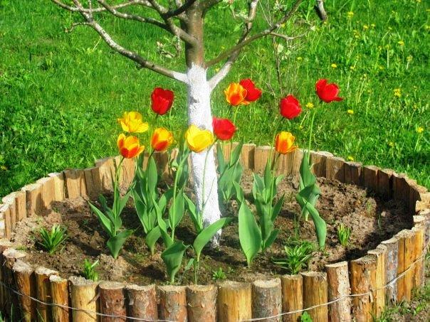 Посадить дерево своими руками