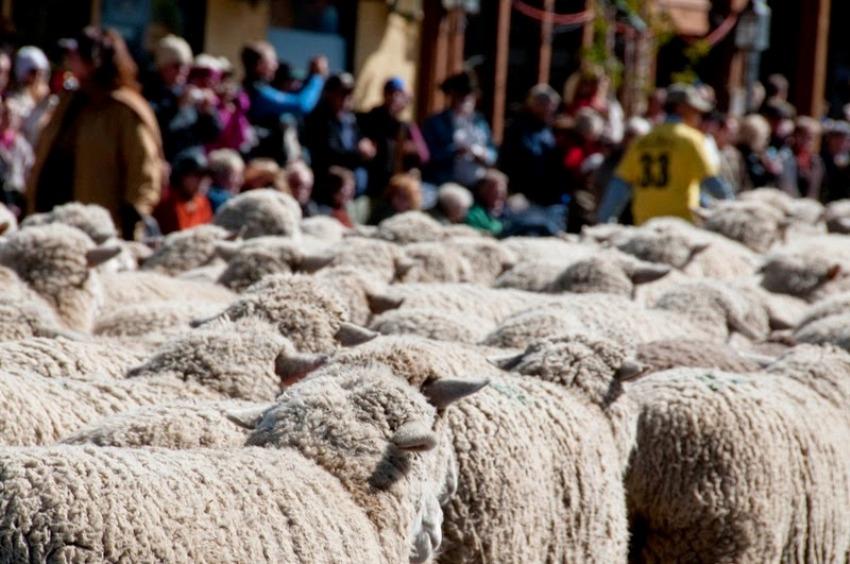terraoko 2015012702 8 Праздник Трейлинг овец в Айдахо.