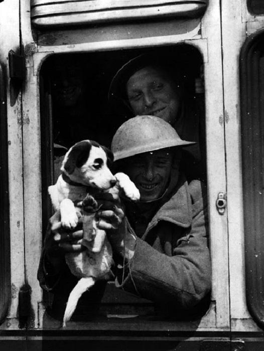 Член британского экспедиционного корпуса улыбается из окна поезда со своим талисманом, во время эвакуации из Франции.