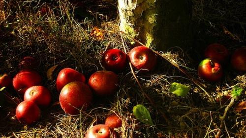 5-apples on the ground