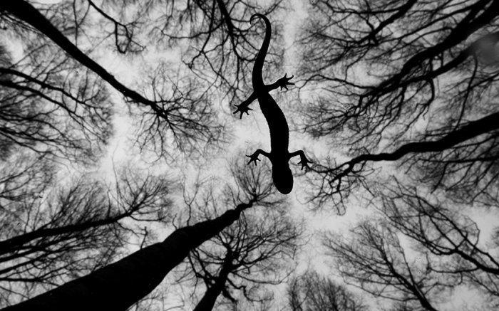 Лучшие фотографии конкурса Wildlife Photographer of the Year 2015