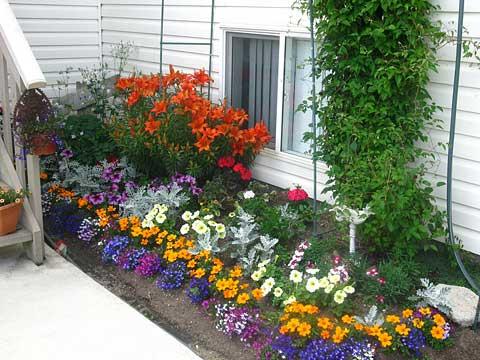 Многолетние цветы цветущие все лето — лучшие сорта для вашей дачи