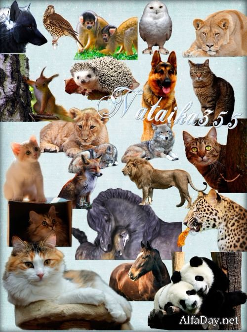 Восприимчивость человека к заболеваниям домашних и диких животных
