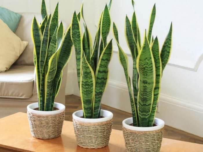 ТОП-5 растений против бессонницы