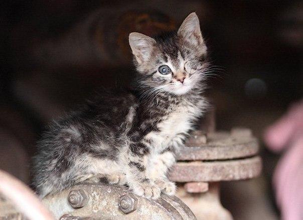 Бездомный котенок - прекрасное стихоторение