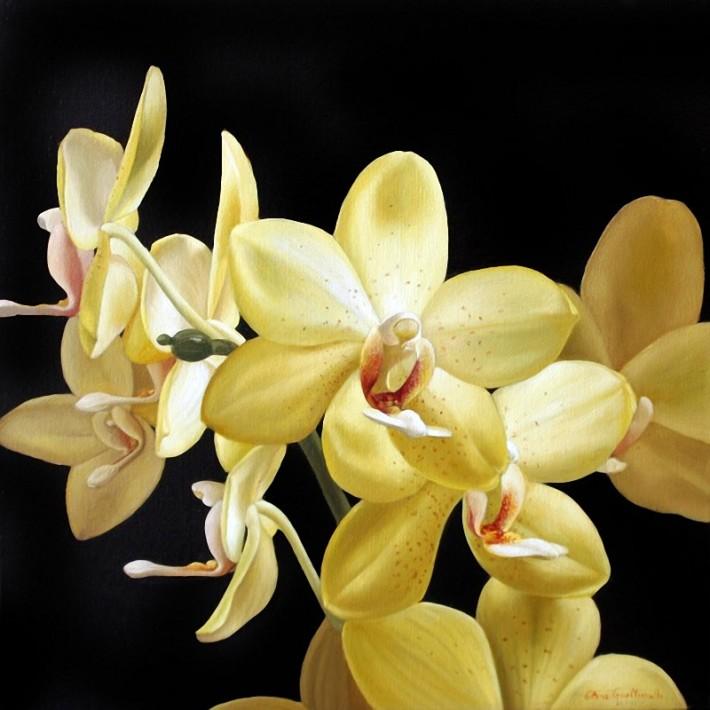 Орхидеи в картинах Elena Gualtierotti