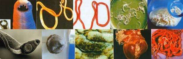 паразиты очищение от химии