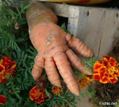 Фруктово-ягодные мутанты, ко…